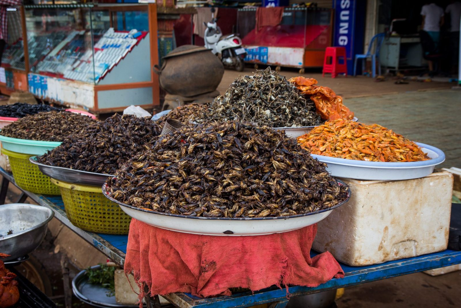 Oblíbenou hmyzí pochoutkou jsou cvrčci a švábi.