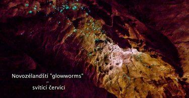 """Novozélandští """"glowworms"""" - svítící červíci"""