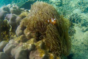 I Nemo se tu najde