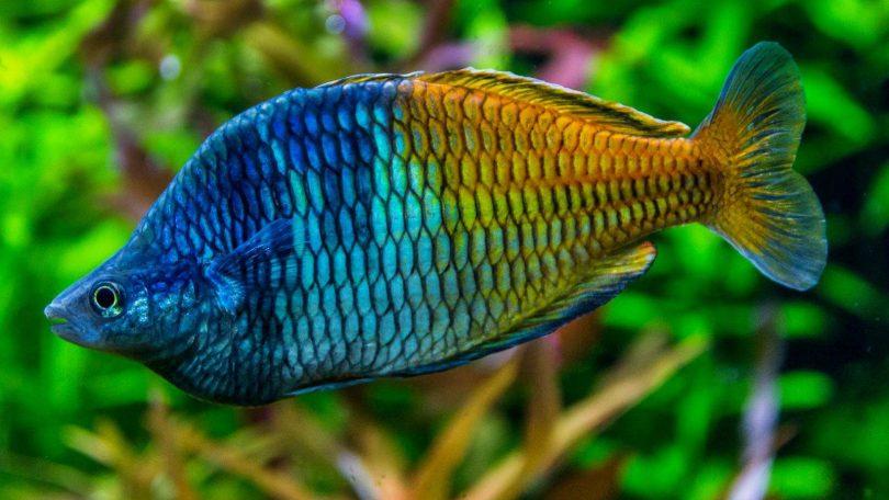 Malajsie 1 - Setkání na ostrově Langkawi a mořské akvárium