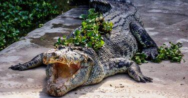 Malajsie 2 - Tvrdá škola skútru, vodopád Temurun a ostré krokodýlí čelisti