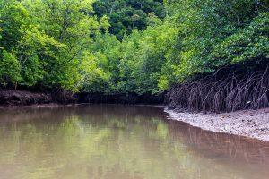 Plavba mezi mangrovy