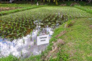 Muzeum rýže Taman Padi