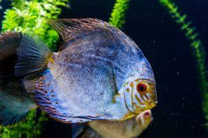 Underwater World v Pantai Cenang