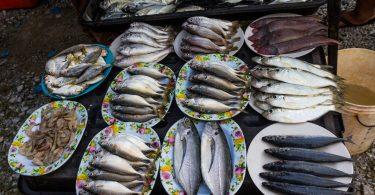 Čerstvé ryby přímo pro gril