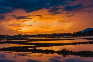 Časté přeháňky a rýžová pole - neodolatelná kombinace