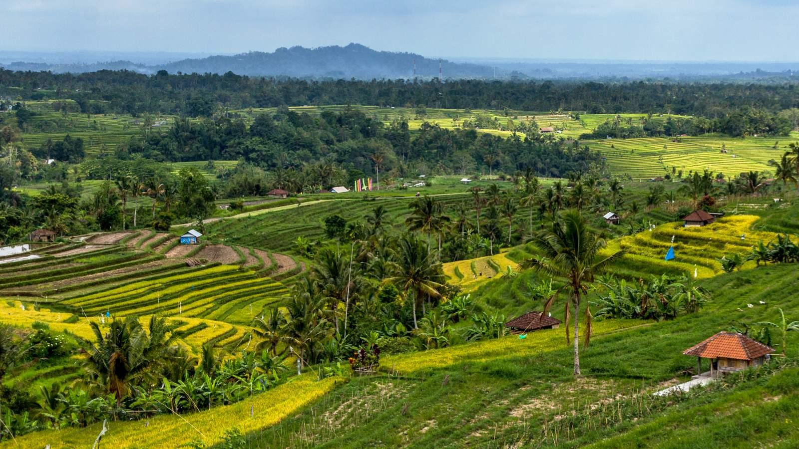 Indonésie 4 - Liduprázdný chrám Luhur Batukaru a rýžové terasy Jatiluwih