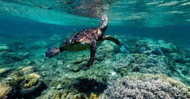 Ostrov Apo Island – mořským želvám na dosah