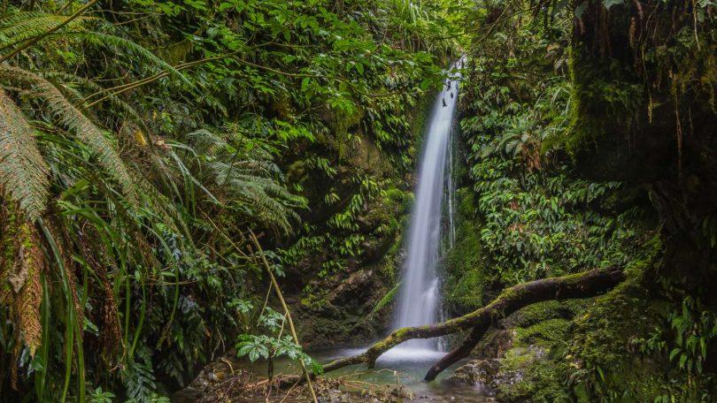 4. Vodní radovánky v Peel Forest a Te Moana Valley
