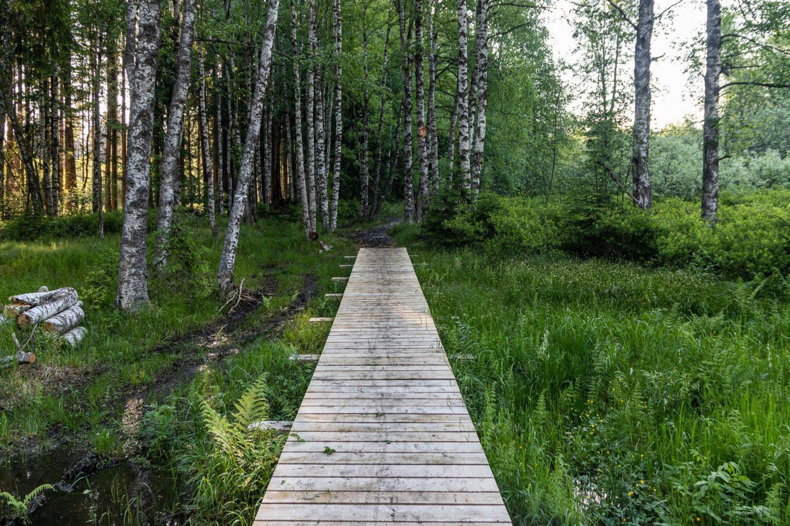 Vlhký březový les