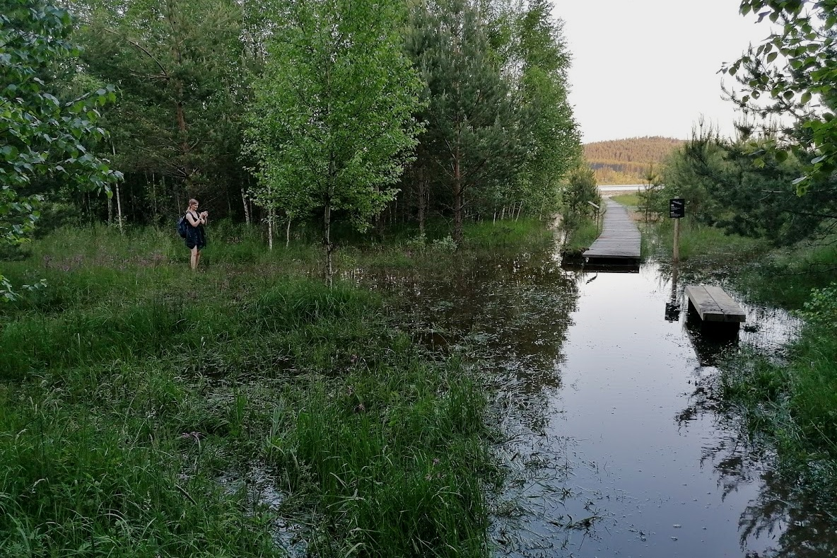 Pravý břeh rybníka je po deštích hodně podmáčený