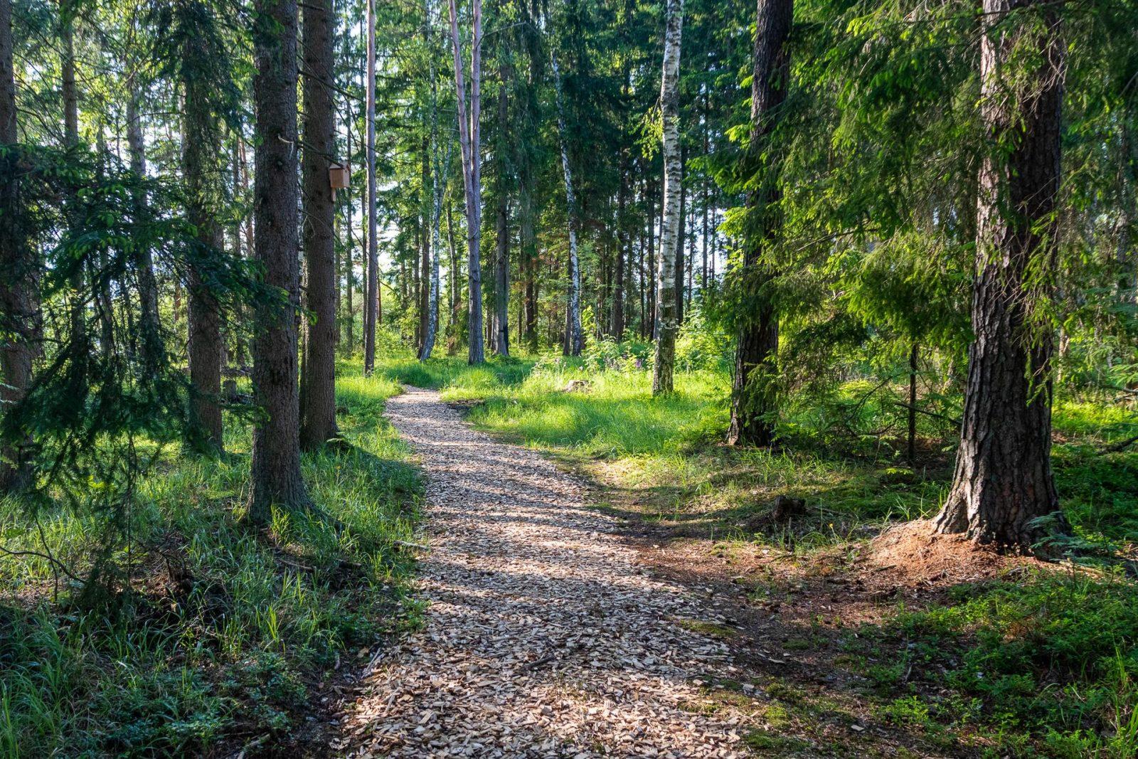 Stezka z dřevěné drti v suchém lese