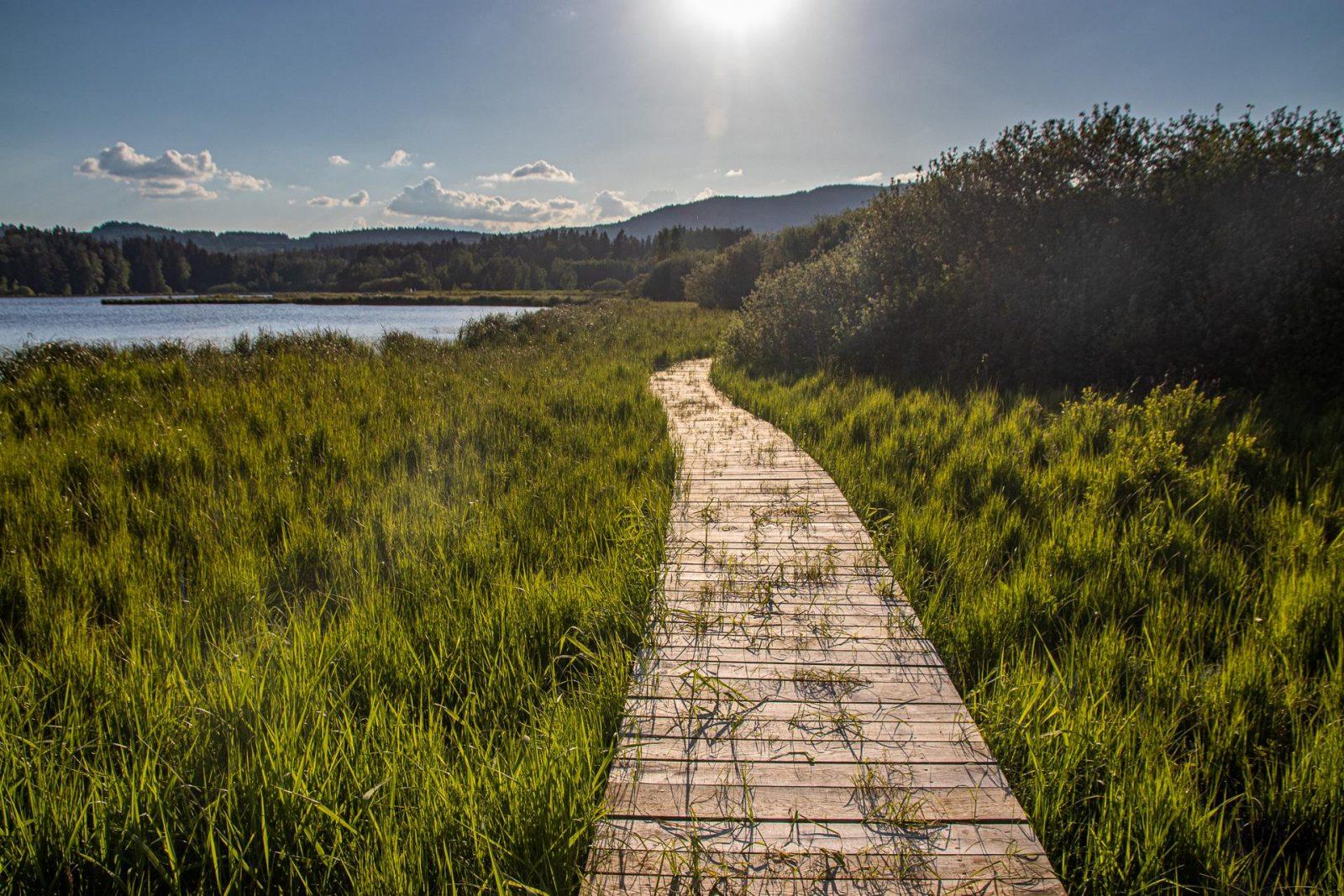 Dřevěný chodník kolem rybníku Olšina